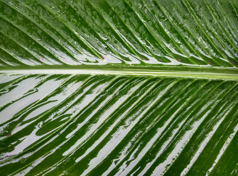 Nature in the rain. Nature`s green is the vibrant color of the earth, water is the continuation of the elements of life. green plants leaf details stock image