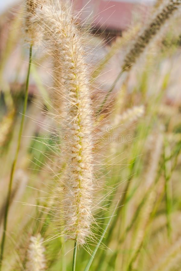 Nature, reed in close up stock photos