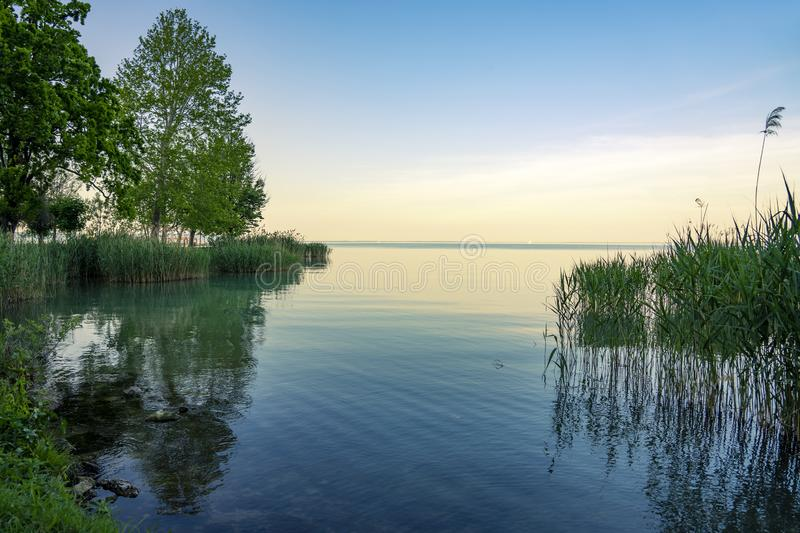 Nature and reed reflection on the Lake Balaton in Hungary at sunset royalty free stock images