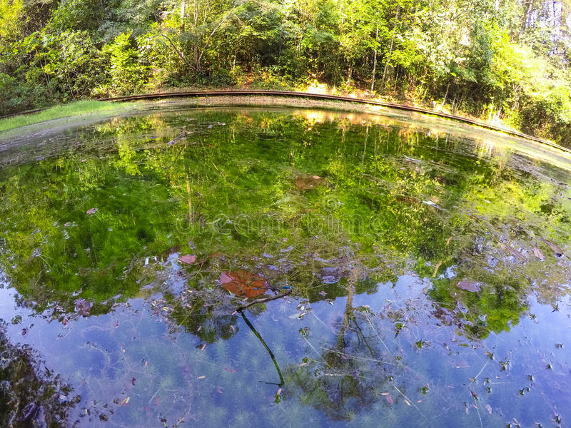 Nature Reflection. Tree reflection on water with aquatic plant stock photo