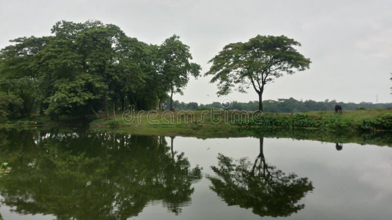 Nature& x27; reflexión de s imagen de archivo libre de regalías