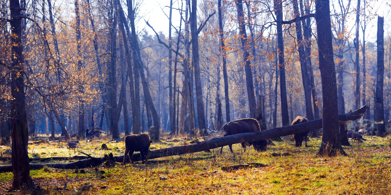 Nature Reserve. Prioksko-Terrasny Nature Biosphere Reserve in Serpukhov District, Russia stock photography