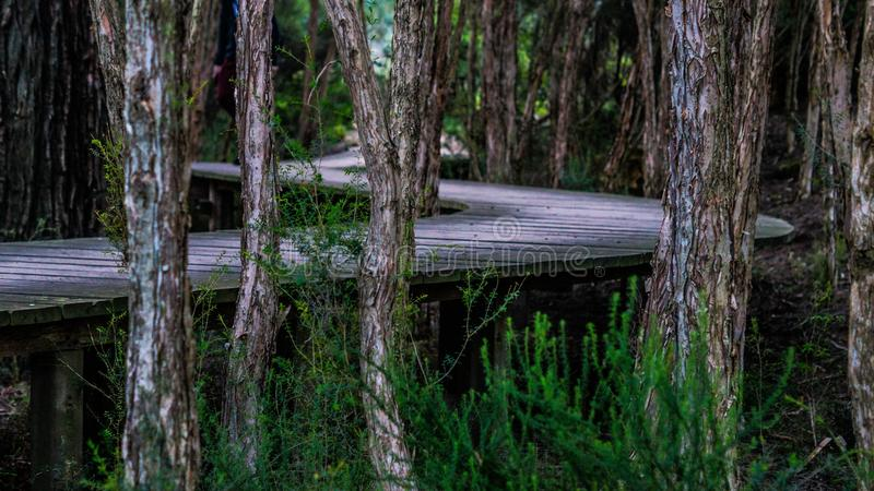 Nature Reserve, Ecosystem, Tree, Forest stock photos
