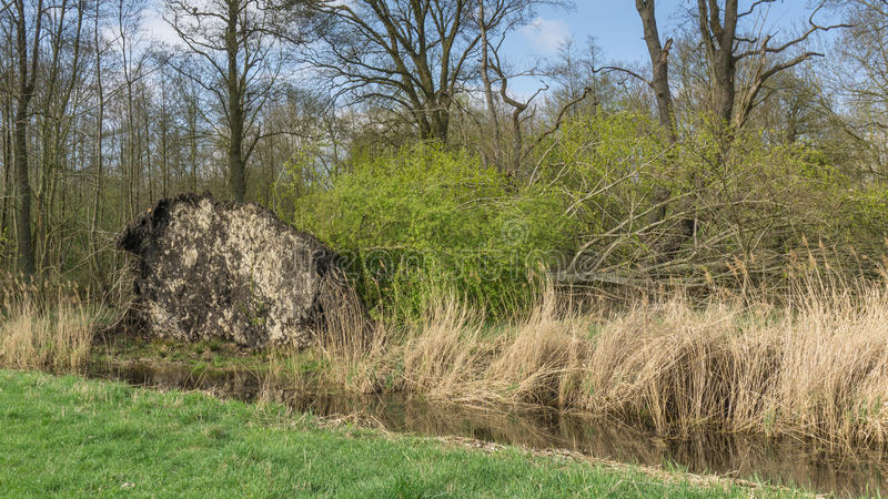 Nature reserve with small river. And a fallen tree stock images