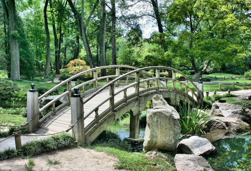 Nature, Nature Reserve, Vegetation, Bridge stock photo