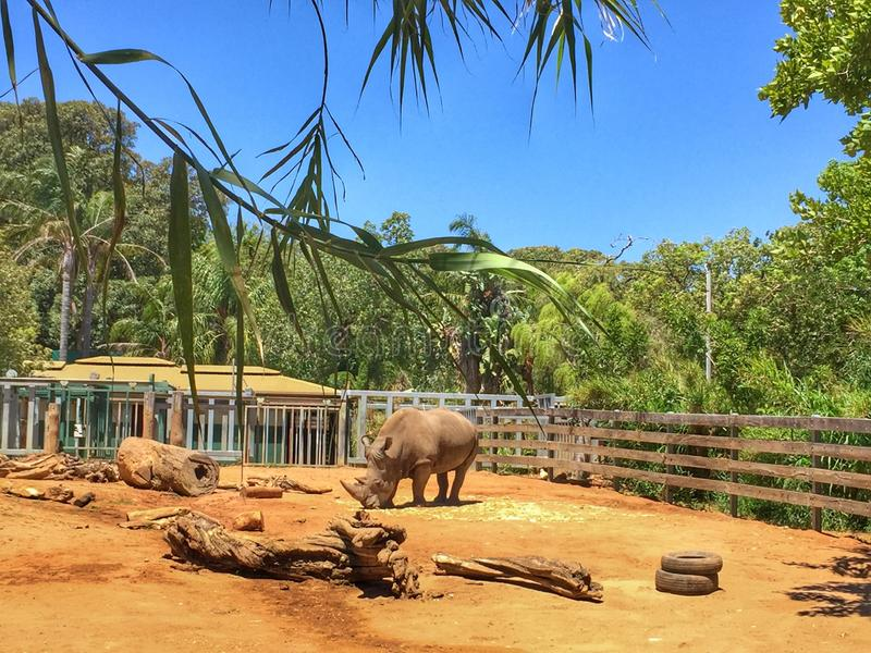 Nature Reserve, Zoo, Wildlife, Elephants And Mammoths royalty free stock images