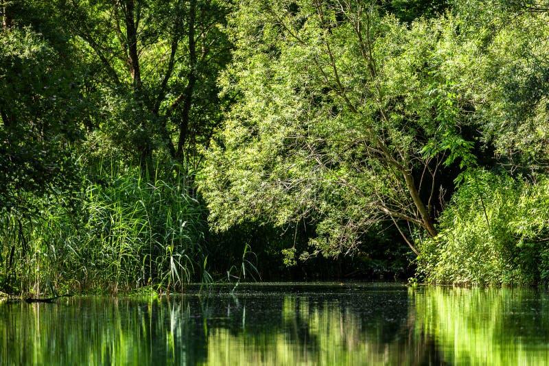 Nature romantique des zones inondables du Danube photos libres de droits