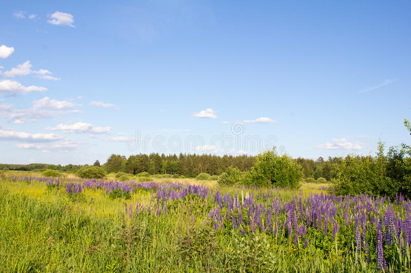 The Nature Of Russia. Road in a wild field of flowers. The Nature Of Russia. The photo was taken in a wild field stock photos