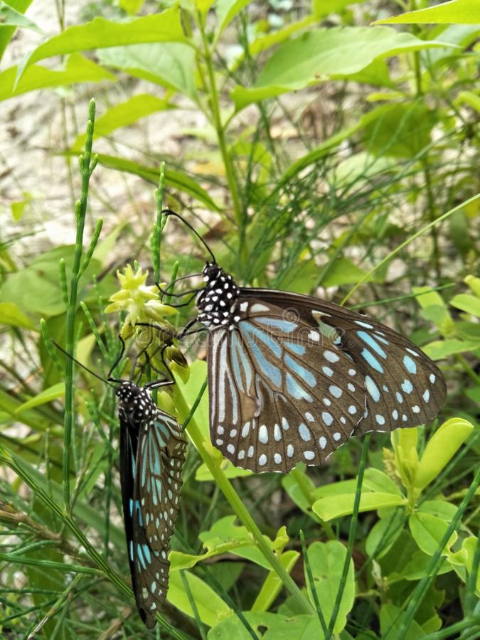Nature& x27;s beauty, butterfly royalty free stock image