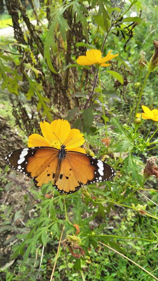 Nature& x27;s beauty butterfly stock image