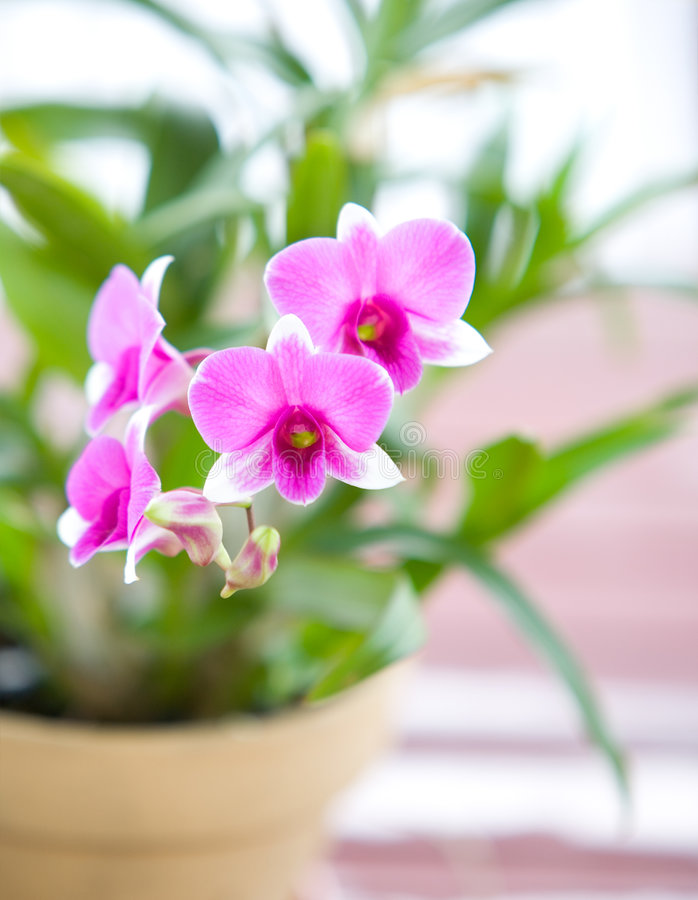 Nature's beauty, mini pink orchids, outdoor stock images