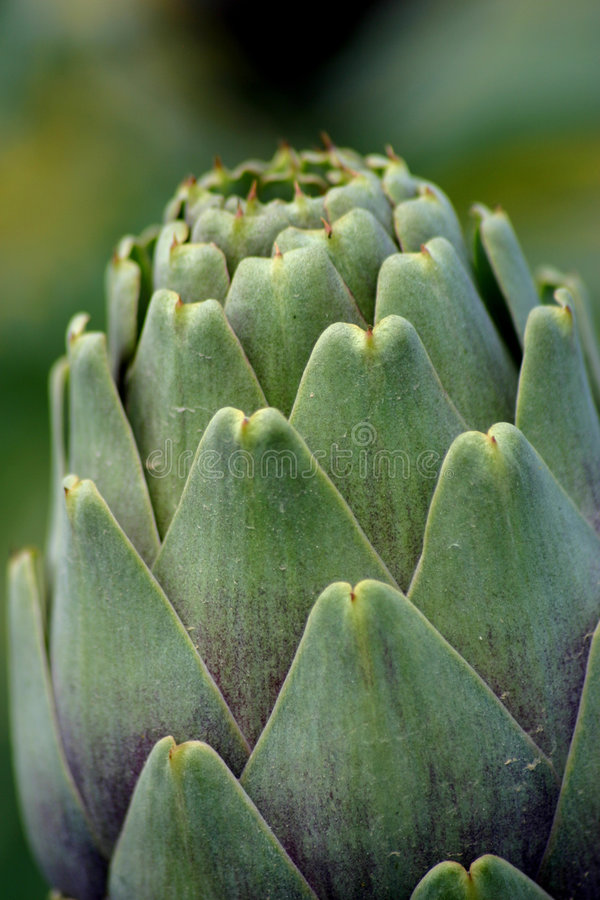 Download Nature's Design stock photo. Image of nutrition, artichoke - 104546