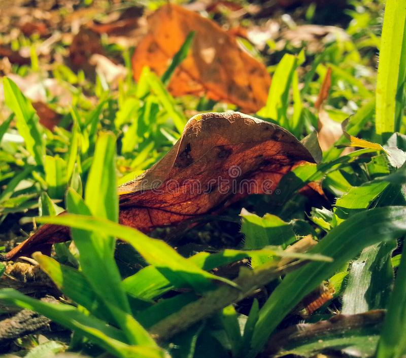Nature Greenery stock images