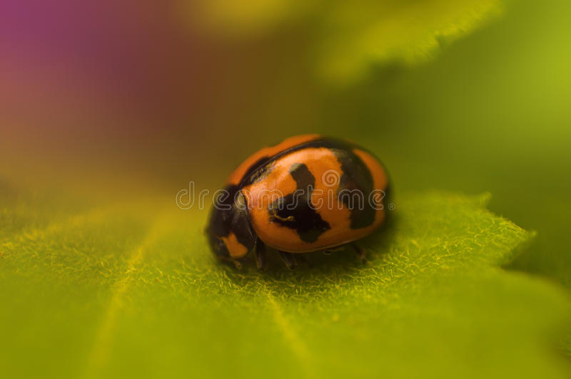 Nature's Jewel royalty free stock photography