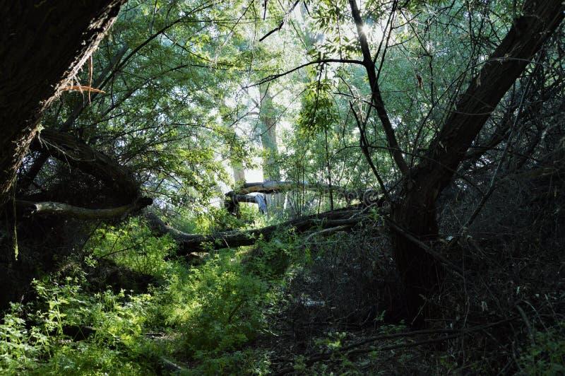 Nature& x27; s-Licht lizenzfreie stockfotos