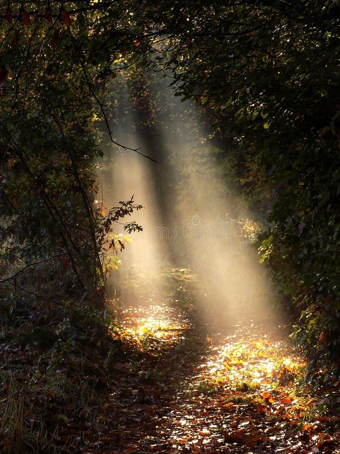 Misty sunbeams on woodland leaves stock photo