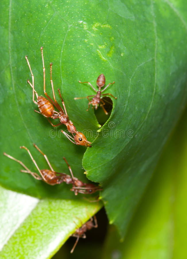 Ants Nest royalty free stock photos