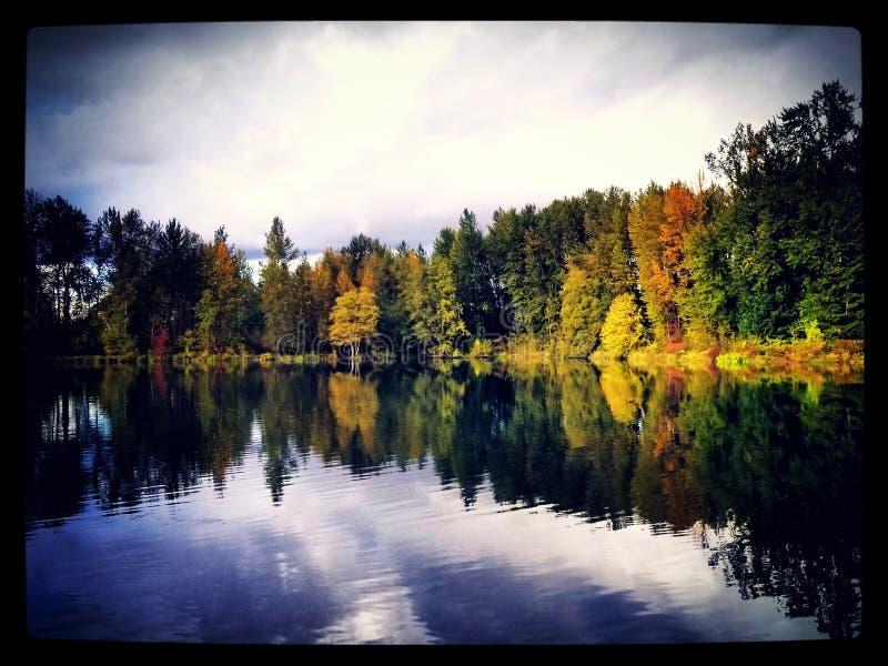 Nature& x27; s-reflexion arkivbild