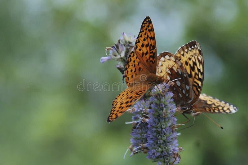 Nature& x27; s schoonheid royalty-vrije stock foto's