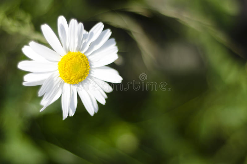 Nature`s Simplicity royalty free stock photography