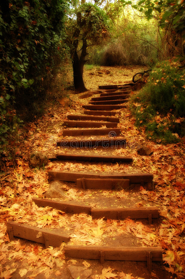 Free Nature S Staircase Stock Photography - 2657732