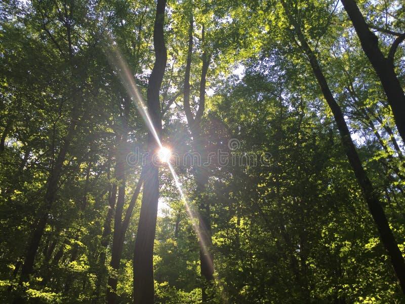 Nature& x27; s zieleń najpierw jest złocista zdjęcie stock