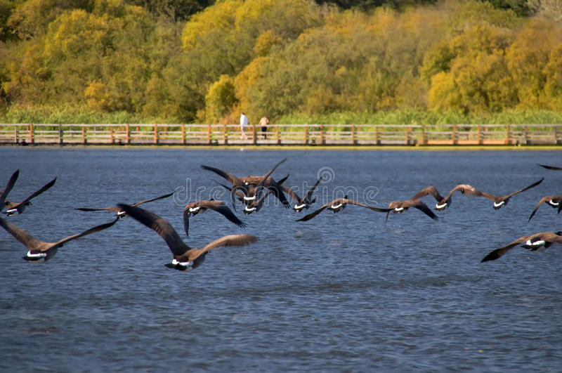 Download A Nature Sanctuary In Autumn Stock Photo - Image: 11106580