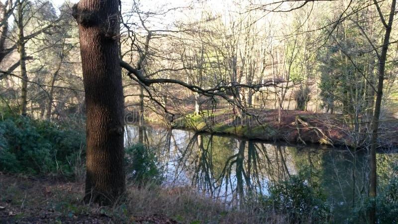 Nature scenery photo libre de droits