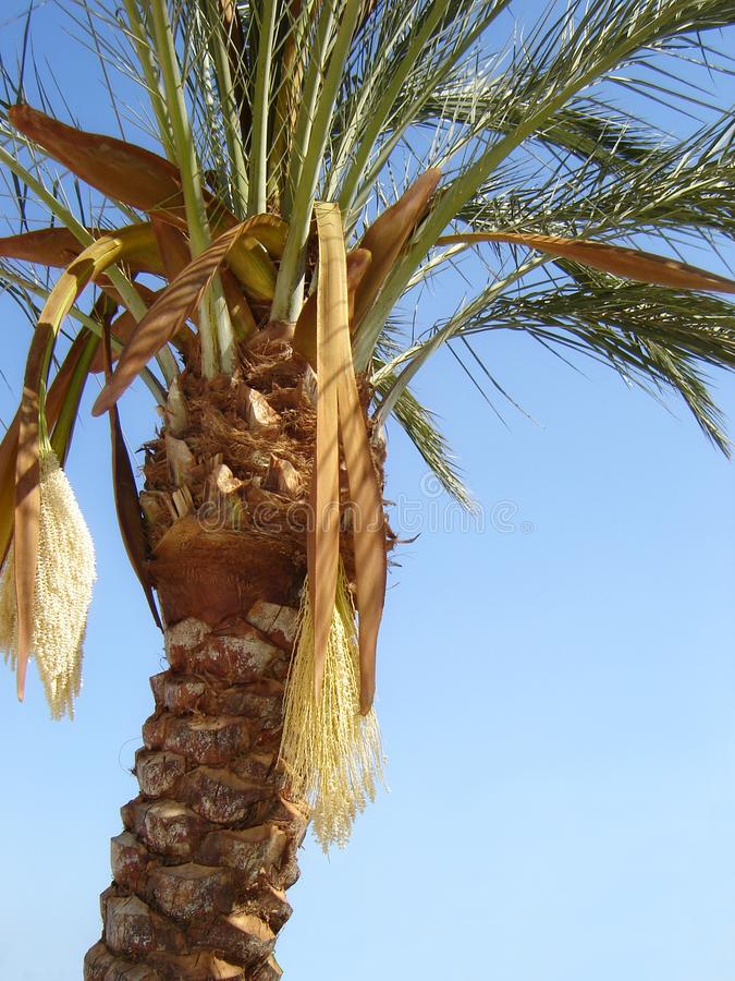Download Nature-scenery With Palmtrees Stock Photo - Image: 2162010