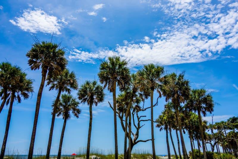 Nature scenes around hunting island south carolina stock image