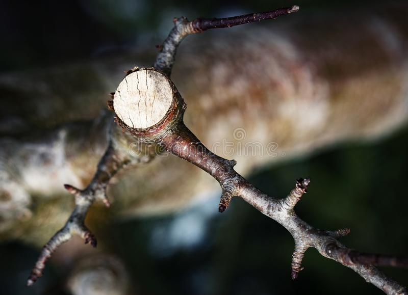 Sawn detail on twig stock photography