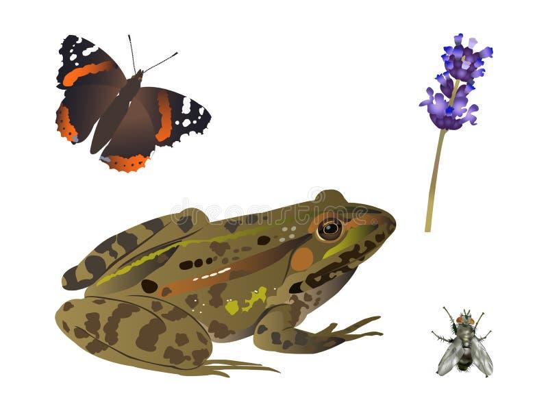 Download Nature set stock photo. Image of natural, frog, flower - 29188336
