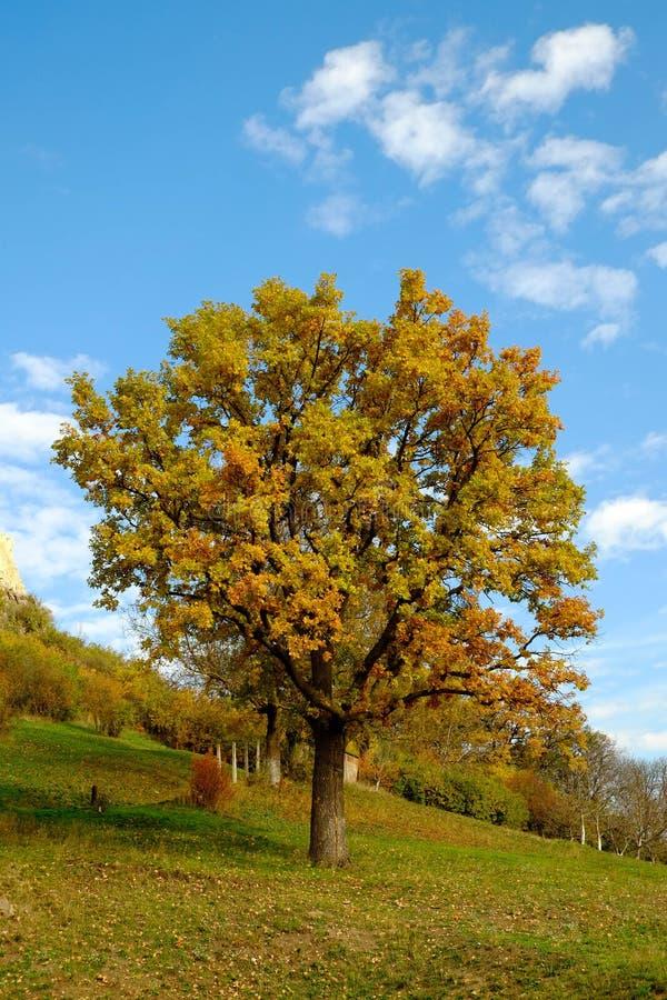 Nature simple image libre de droits