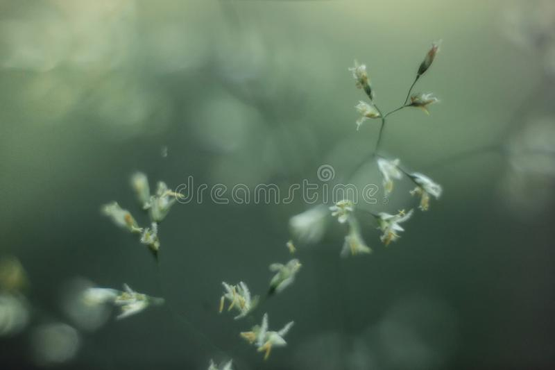 Nature small plants macro background stock image