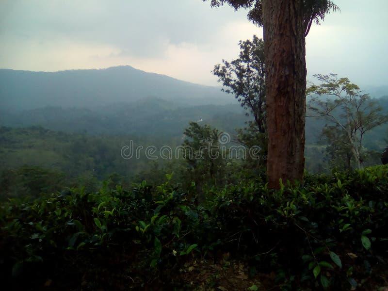 nature of srilanka stock image