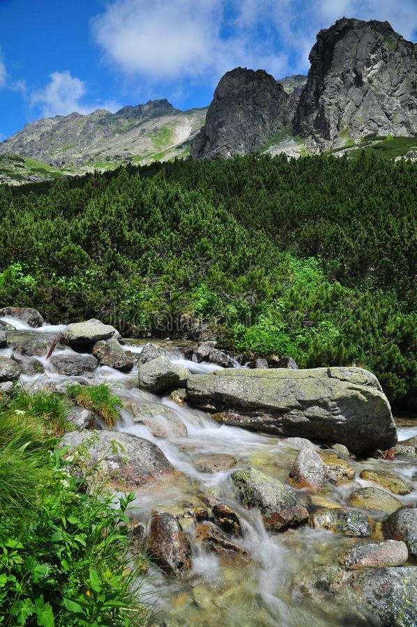 Nature stream High tatras. Nature stream in High Tatras nountains, summer view of national park of Slovakia stock images
