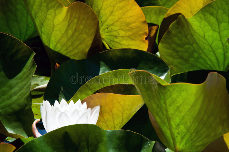Nature leaves structure royalty free stock photography
