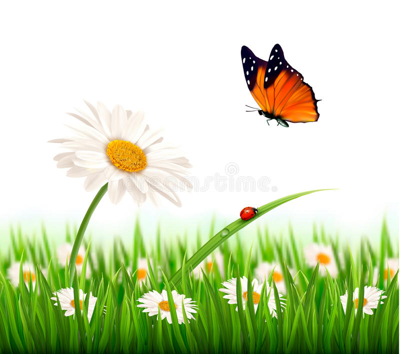 Bon Download Nature Summer Daisy Flower With Butterfly. Stock Vector    Illustration Of Nature, Garden