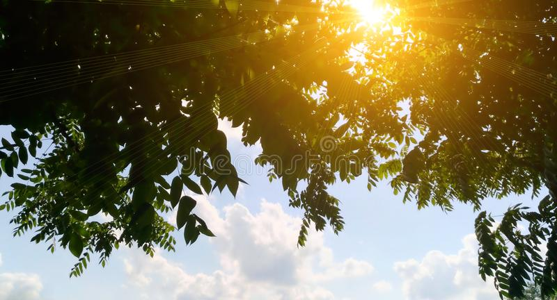 Nature sunset through the leaves tree on blue sky. royalty free stock photo