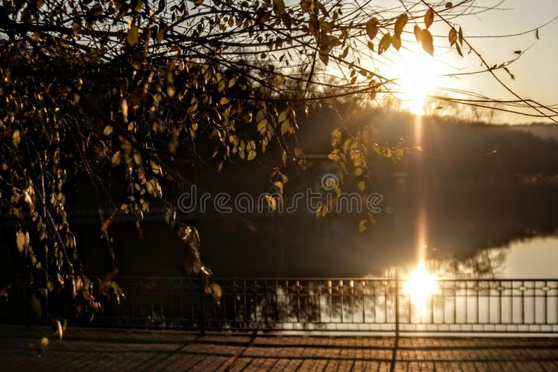 nature sunset tree heels sunlight royalty free stock images
