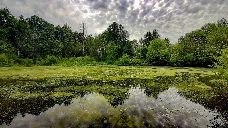 Nature sur l'eau photo libre de droits