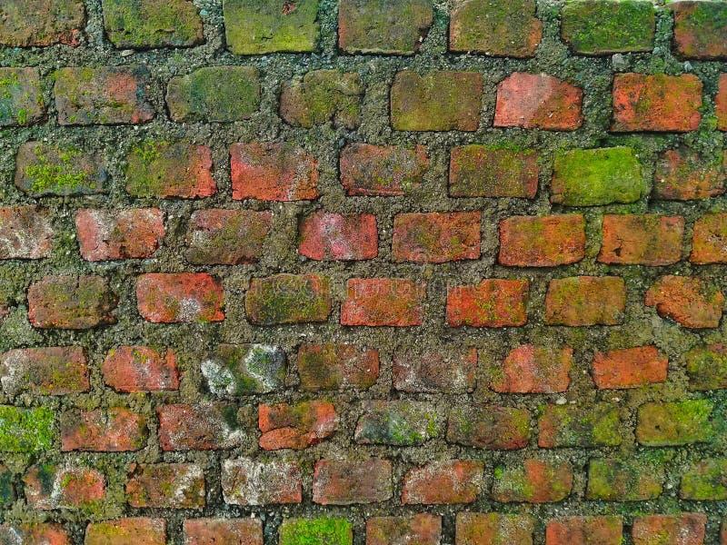 Nature sur le mur image libre de droits