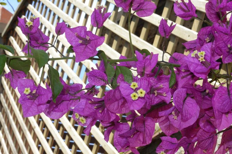 Nature sur le trellis photo stock