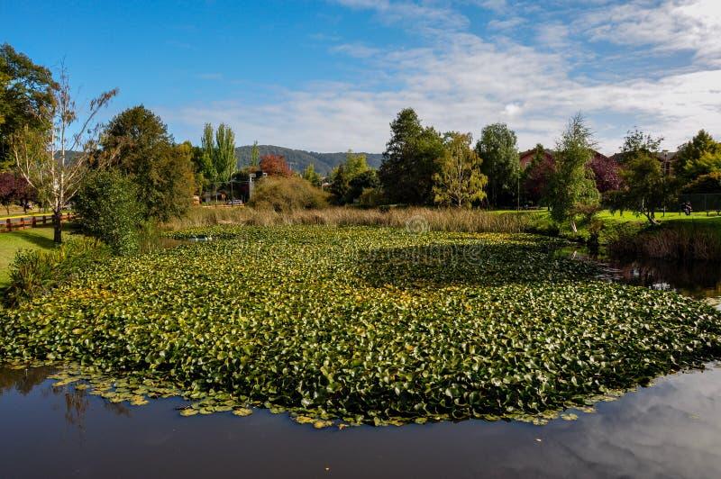 Nature surrounding beautiful Valdivia, Chile.  royalty free stock photography