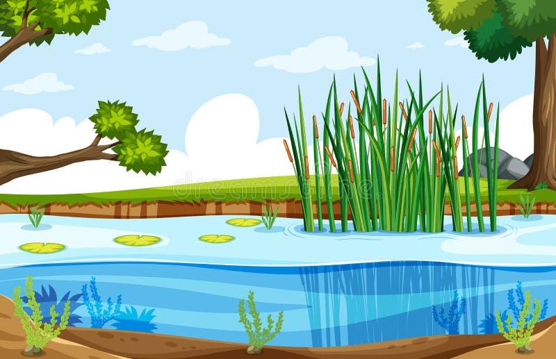 A nature swamp landscape vector illustration