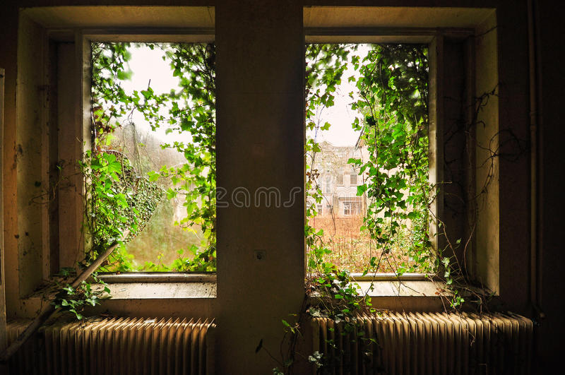 Nature takes over. Windowview from an abandoned psychiatric hospital in Holland stock images