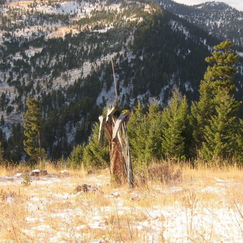 Nature talks royalty free stock image