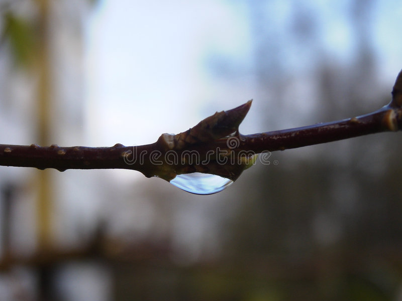 nature tear στοκ εικόνα