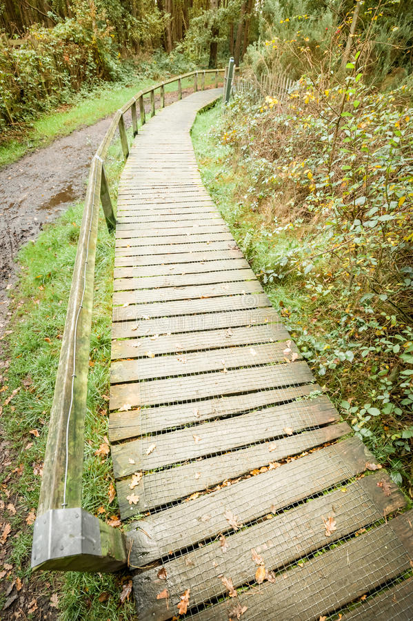 Download Nature trail stock photo. Image of woodland, countryside - 27384166