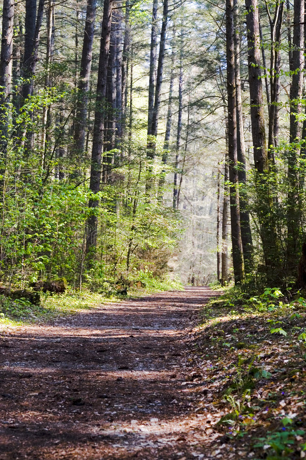 Free Nature Trail Stock Images - 3255134